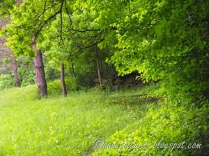 Din iarba….