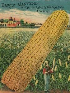 heirloom corn seeds - Google Search